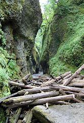 Oneonta Gorge, Logjam